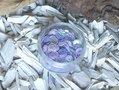 Pailletten-rond-cup-6-mm.-500st.-lila-metallic